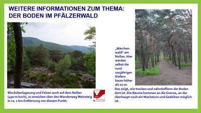 Waldböden im Pfälzerwald