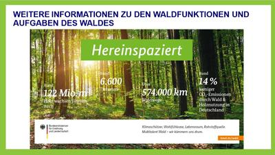 Waldfunktionen